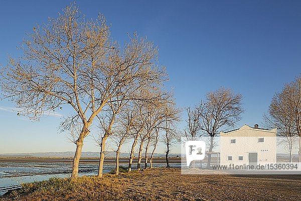 Überschwemmtes Reisfeld und kleines Bauernhaus  Naturschutzgebiet Ebro-Delta  Provinz Tarragona  Katalonien  Spanien  Europa