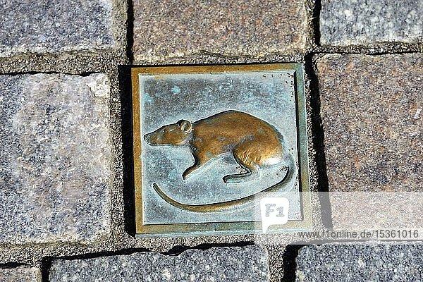 Pflasterstein Ratte  Fußgängerzone  Hameln  Niedersachsen  Deutschland  Europa