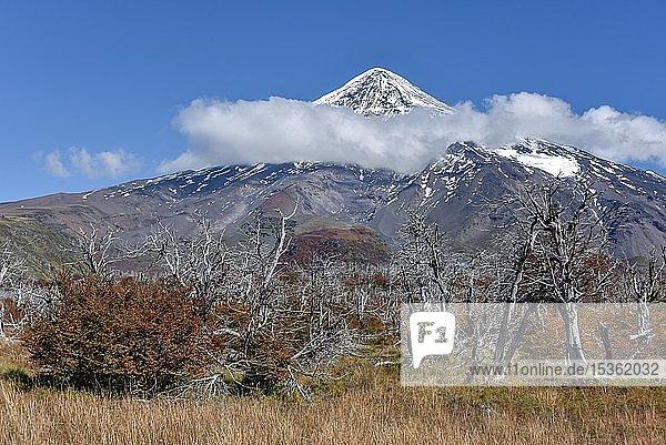 Schneebedeckter Vulkan Lanin  Gipfel von Wolken umgeben  zwischen San Martin de los Andes und Pucon  Nationalpark Lanin  Patagonien  Argentinien  Südamerika