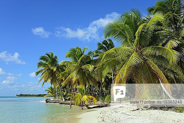 Palmenstrand  Parque Nacional del Este  Dominikanische Republik  Mittelamerika