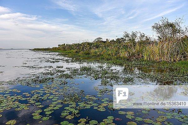 Sumpfgebiet Esteros del Iberá  Provinz Corrientes  Argentinien  Südamerika