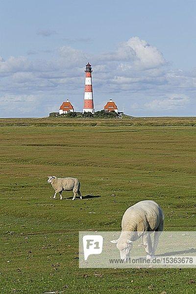 Schafe grasen auf Salzwiesen  hinten Westerhever Leuchtturm  Westerhever  Schleswig-Holstein  Deutschland  Europa