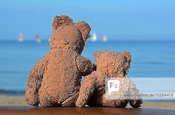 Zwei alte Teddybären schauen auf die Ostsee  Travemünde  Schleswig-Holstein  Deutschland  Europa