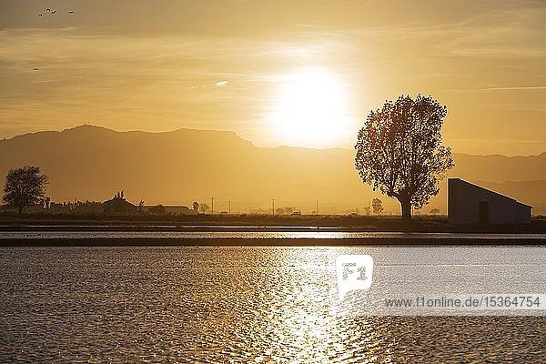 Überschwemmtes Reisfeld bei Sonnenuntergang  Naturschutzgebiet Ebro-Delta  Provinz Tarragona  Katalonien  Spanien  Europa