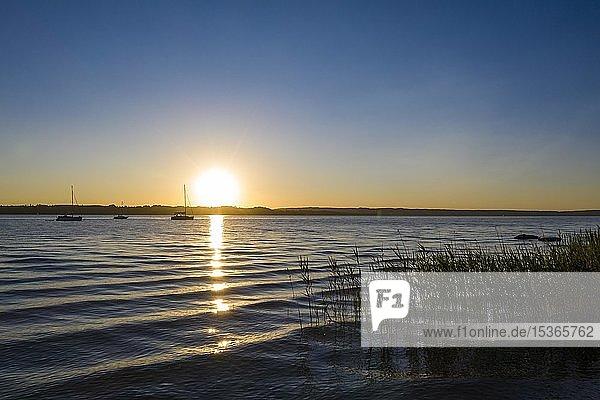 Schilfufer  Sonnenuntergang am Starnberger See  Fünfseenland  Oberbayern  Bayern  Deutschland  Europa