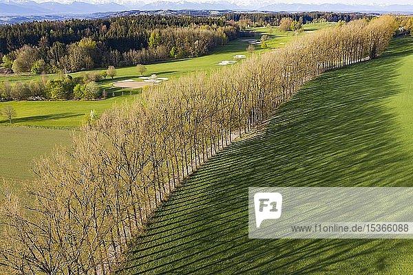 Baumreihe mit langen Schatten  Allee bei Icking  Oberbayern  Bayern  Deutschland  Europa