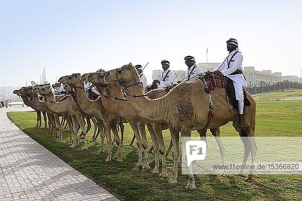 Berittene Kamelgarde vor dem Regierungspalast in Doha  Qatar Berittene Kamelgarde vor dem Regierungspalast in Doha, Qatar