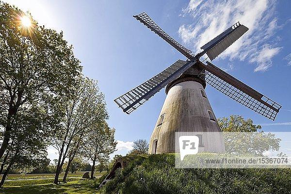 Windmühle Heimsen  Wall-Holländer von 1873  Petershagen  Westfälische Mühlenroute  Nordrhein-Westfalen  Deutschland  Europa
