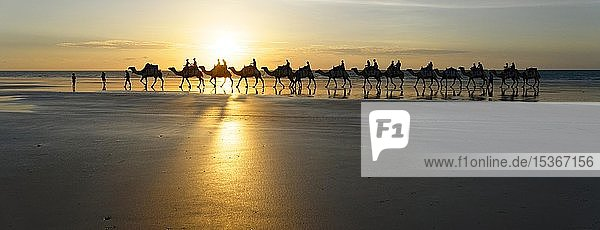 Panorama  Camels being ridden by tourists on Cable Beach  Broome  West Kimberley  Western Australia  Australia  Oceania