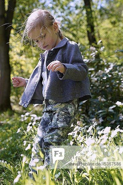 Kleines Mädchen zwischen Blumen auf der Wiese  Tschechien  Europa