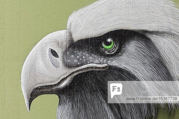 Graffiti  Kopf eines Raubvogel  grünes Auge  Profil  Neuss  Nordrhein-Westfalen  Deutschland  Europa