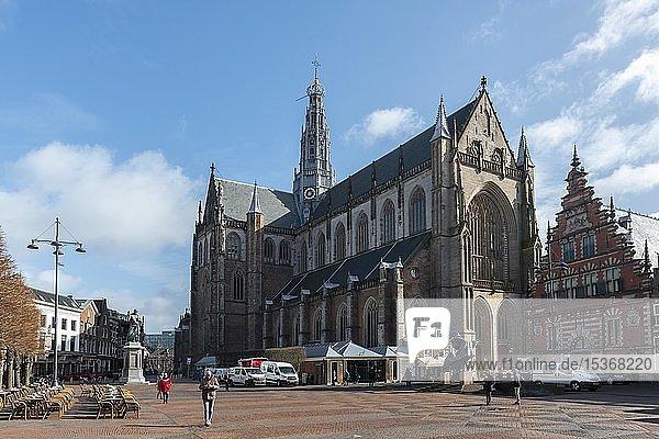 Gotische Kathedrale Sint-Bavokerk auf dem Marktplatz  Grote Markt  Haarlem  Provinz Nord-Holland  Noord-Holland  Niederlande  Europa