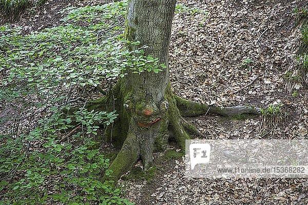 Geschnitztes Baumgesicht in einem Baumstamm  Steckeschlääfer-Klamm im Morgenbachtal  Binger Stadtwald  Bingen am Rhein  Rheinland-Pfalz  Deutschland  Europa
