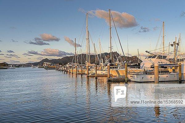 Marina mit Steg mit Yachten und Segelbooten in der Bucht von Paihia  Far North District  Northland  Nordinsel  Neuseeland  Ozeanien