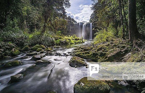Wasserfall  Whangarei Falls  Fluss Hatea  Whangarei Falls Scenic Reserve  Northland  Nordinsel  Neuseeland  Ozeanien