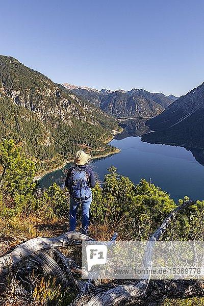 Wanderin schaut in die Ferne  hinten Schönjöchl  Plansee  Ammergauer Alpen  Bezirk Reutte  Tirol  Österreich  Europa