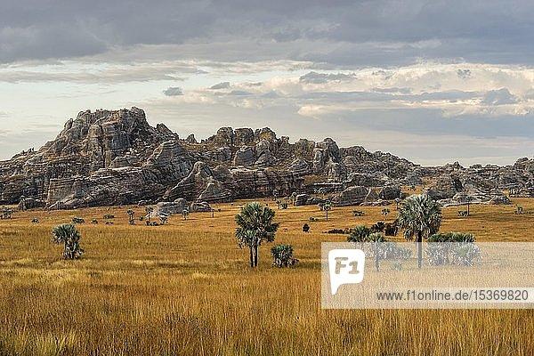 Landschaft mit Felsen und Bismarckpalmen (Bismarckia nobilis)  Isalo Nationalpark  Madagaskar  Afrika