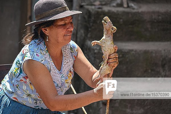 Local woman skewers Cuy  giant guinea pig on a stick to grill it over a fire  preparation to traditional Cuy dish Cusco  Peru  South America