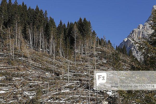 Sturmschaden im Bergwald  Dolomiten  Trentino  Italien  Europa