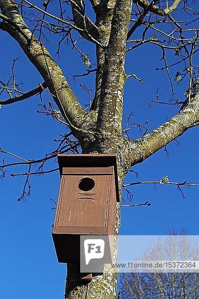Vogelnistkasten  Baden-Württemberg  Deutschland  Europa