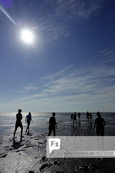 Persons in Backlight  Wadden Sea Hike  Schleswig-Holstein Wadden Sea National Park  Schleswig-Holstein  Germany  Europe