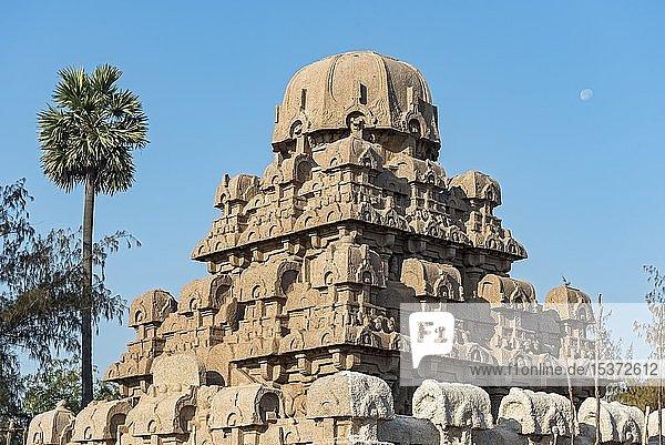 Dharmaraja Ratha Denkmal  Pancha Rathas  Fünf Rathas  Mahabalipuram  Mamallapuram  Indien  Asien