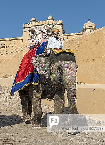 Bemalter indischer Elefant bei Amber Fort  Jaipur  Rajasthan  Indien  Asien