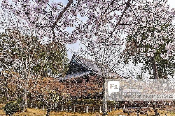 Shinsho Gokurakuji oder Shinnyo-do Tempel  japanische Kirschblüte  Kyoto  Japan  Asien