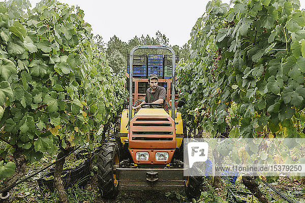 Ackerschlepper mit geernteten Trauben im Weinberg