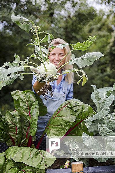 Blond lächelnde Frau bei der Kohlrabi-Ernte