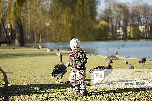 Kleinkind spielt mit Gänsen an einem Teich im Park
