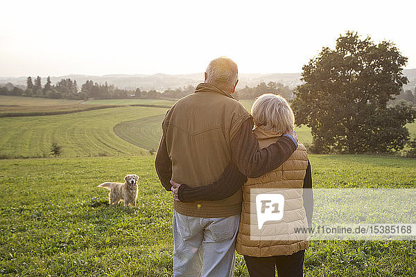 Rückenansicht eines glücklichen älteren Paares  das Arm in Arm auf einer Wiese steht und den Sonnenuntergang genießt