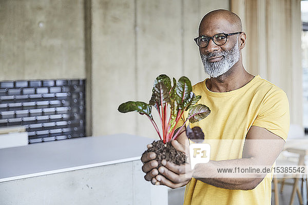 Portrait of smiling mature businessman holding plant in office