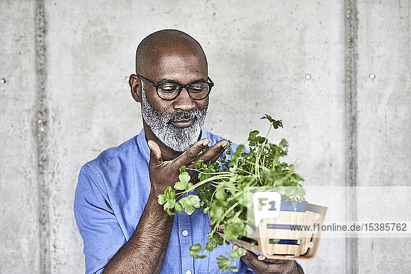 Mature businessman holding plants at concrete wall