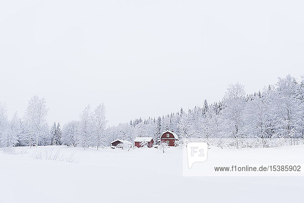 Finland  Kuopio  farmhouse in winter landscape