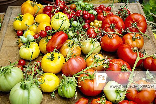 Haufen verschiedener Tomatensorten
