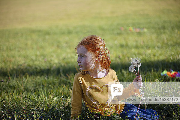 Redheaded girl sitting in field with blowball