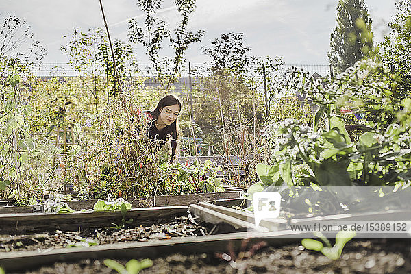 Woman gardening in urban garden