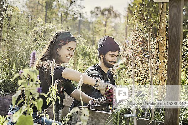 Glückliches Paar gärtnert gemeinsam im Stadtgarten