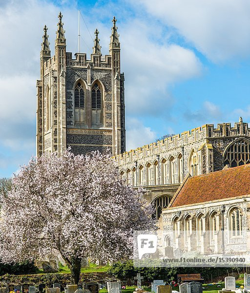 Holy Trinity Church at spring time  in the village of Long Melford  Suffolk  East Anglia  UK.