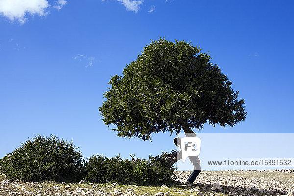 Morocco  Sidi Kaouki  man wearing a bowler hat standing crooked at a tree