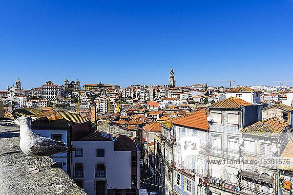 Portugal  Porto  Stadtansicht  Möwe an der Wand