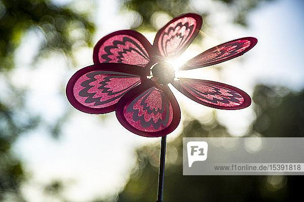 Pinwheel at backlight, Pinwheel at backlight