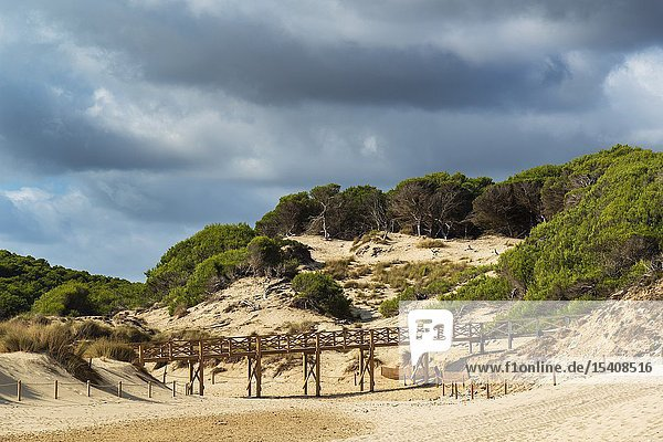 Regeneration reserve of sand dunes on the beach of Cala Mesquida Majorca Spain  the sky is cloudy.