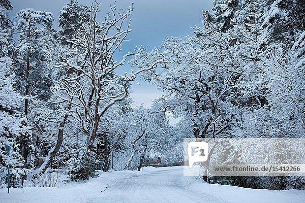 Snowy road in Varbola