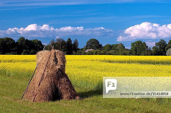 A Haystack on a Field