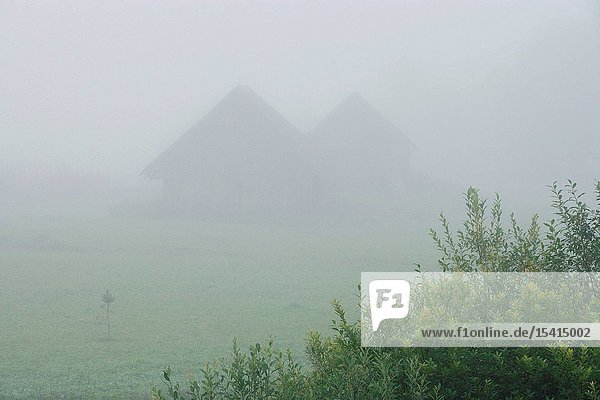 Foggy Landscape in Võru County  Southern Estonia