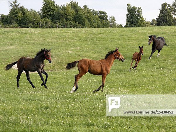 Horses on a field.