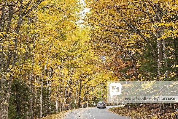 USA  Maine  Mt. Desert Island  Acadia National Park  autumn  park road.