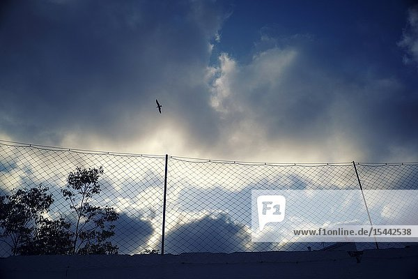 View of a metal fence with clouds a tree and a bird flying. Mahon Menorca  Balearic Islands  Spain  Europe.